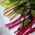 カラフル葉野菜、ブライトライト(スイスチャード)の食べ方