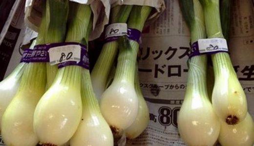 葉たまねぎ(葉玉葱)のスープ レシピ