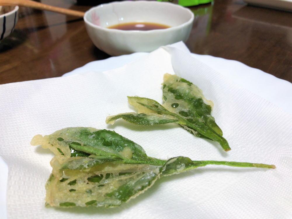 天ぷらもイケる!お茶の葉 を食べるレシピ