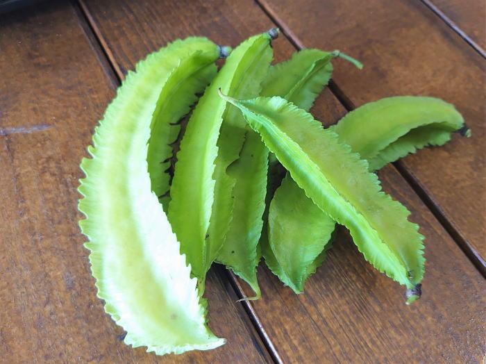 四角豆(シカクマメ)はサクサク食べられるおもしろ野菜